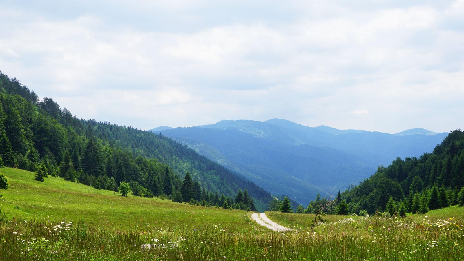 Tara National Park hiking trails
